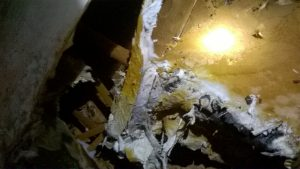 Outbreak of Dry Rot